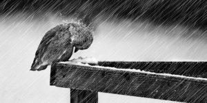 uccellino-si-difende-dalla-tempesta